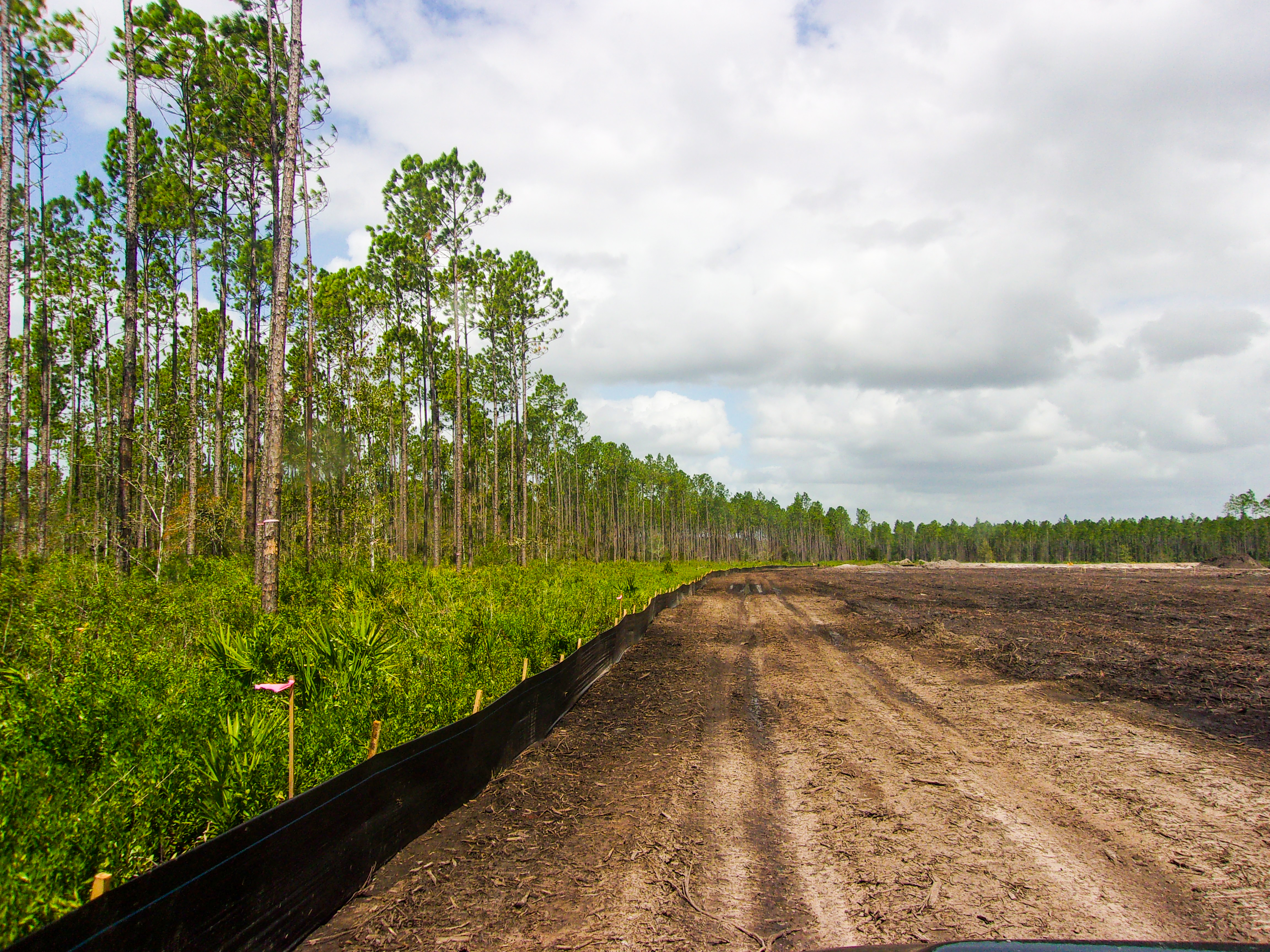 Photo of the Brandy Branch Borrow Pit showing the edge of the parcel with cleared land to the right and trees to the left