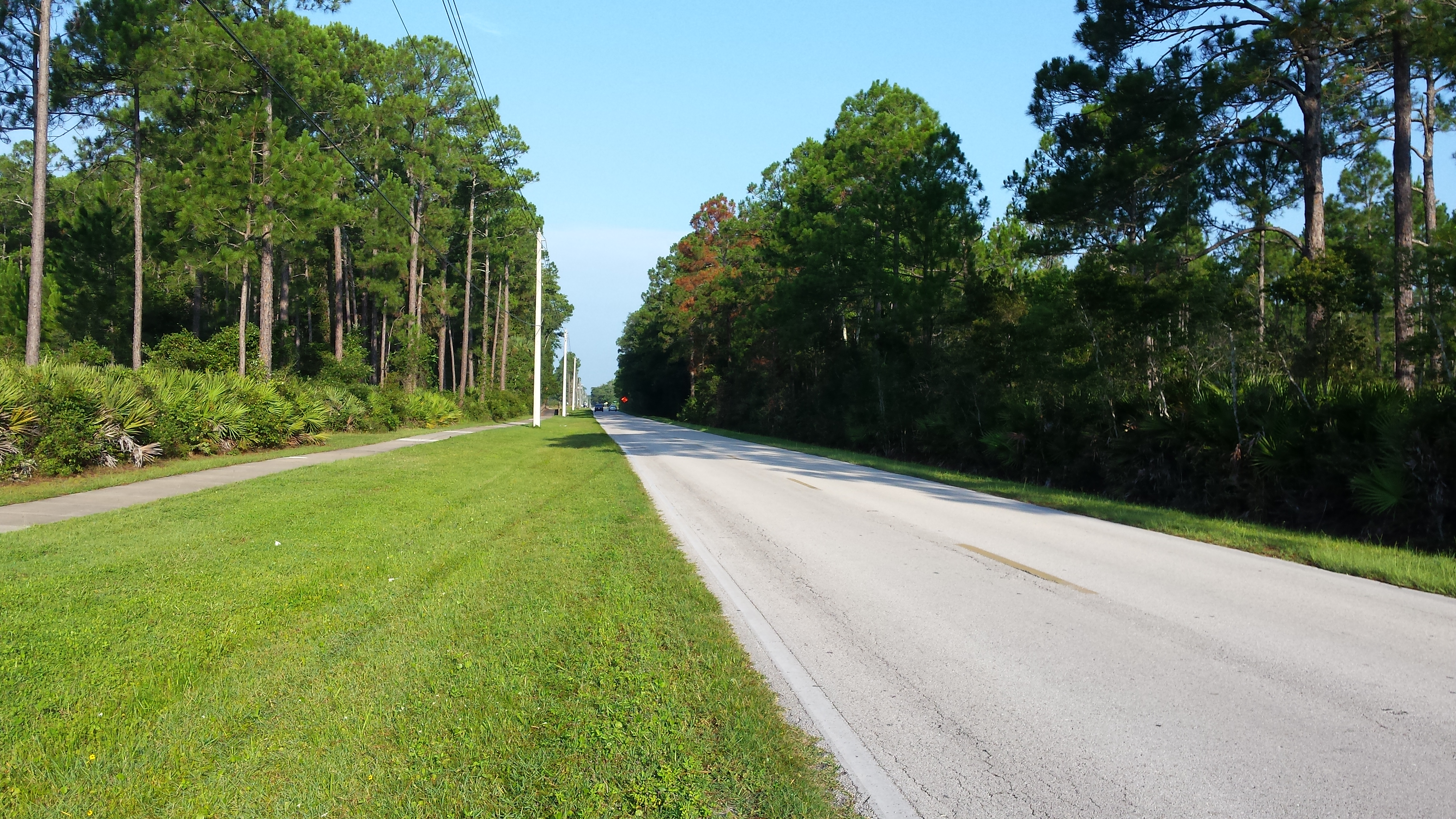 A photo of woodlawn road on a sunny day surrounded by green grass and pine trees